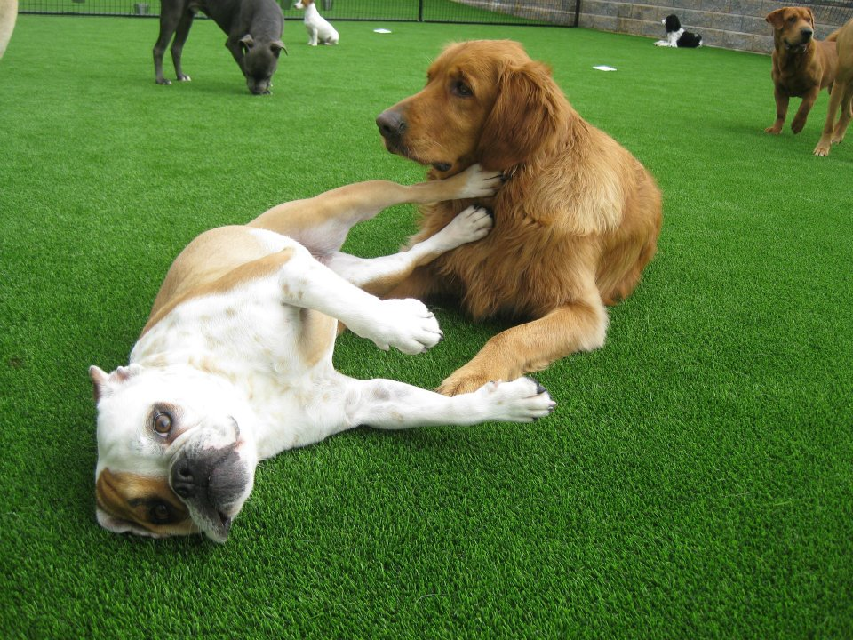 The Synthetic Turf Dog Grass Roll